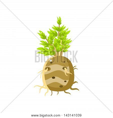 Fresh Turnip Primitive Realistic Illustration. Flat Bright Color Vector Icon Isolated On White Background.