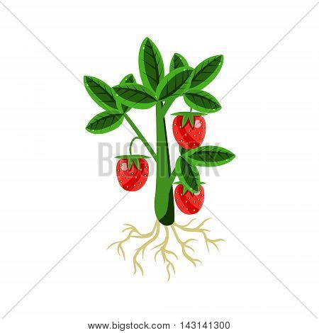 Fresh Strawberry Primitive Realistic Illustration. Flat Bright Color Vector Icon Isolated On White Background.