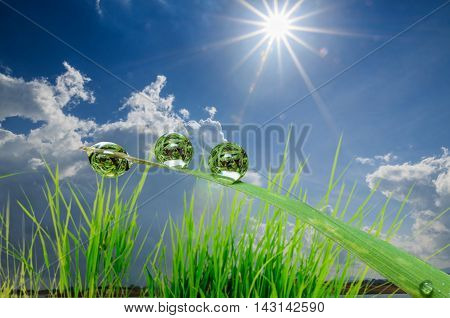 Dew drops on green grass leaves with sunlight and blue sky clouds as background