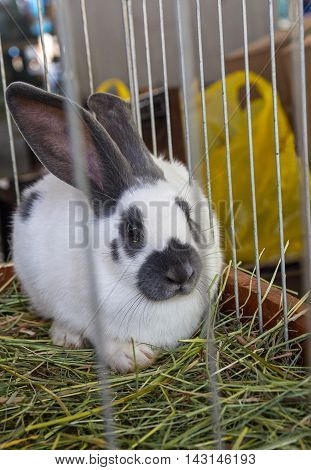White furry rabbit in the cage. Animals