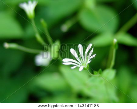 White flower on the green grass flowering period background