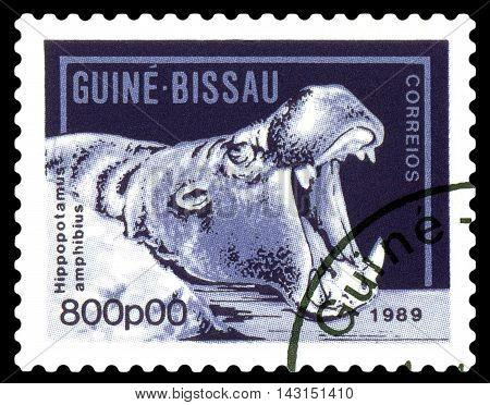 STAVROPOL RUSSIA - August 11 2016: A stamp printed by Guinea - Bissau shows African hippopotamus circa 1989.