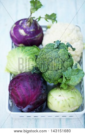 Collection of various types of cabbage in a box