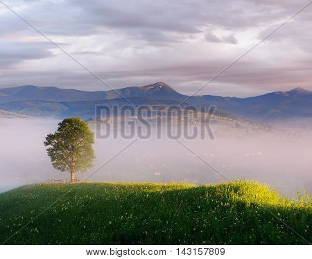 Summer landscape with a lone tree. Morning in a mountain village. Collage of two frames. Art processing photos