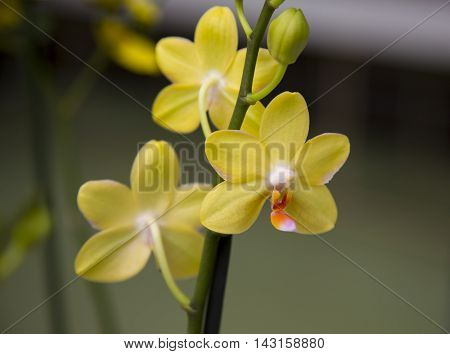 orchid flowers grow in the park growing flowers orchid in a greenhouse