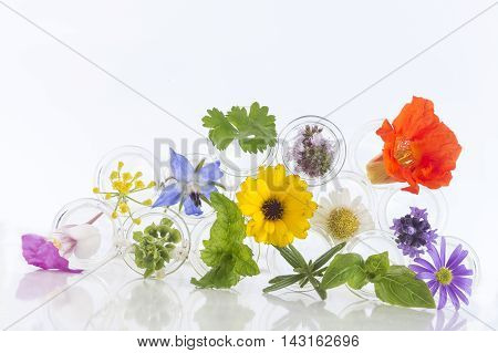 herbal therapy concept, Flowers in test-tubes isolated on white
