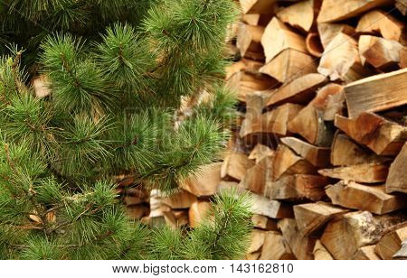 Green pine branches in front of stacked firewood piles