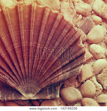 Vacations concept Sunny marine background with shell and pebble