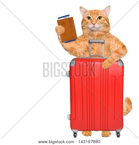 Red cat with a suitcase and document. Isolated on white.