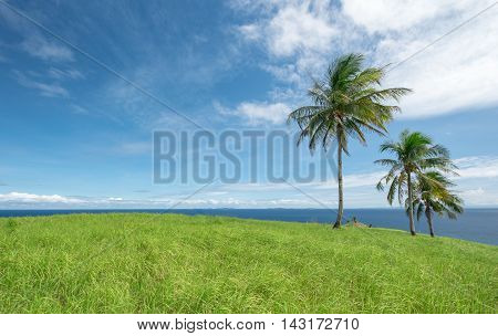 A bright grassy hill on top of a tropical island