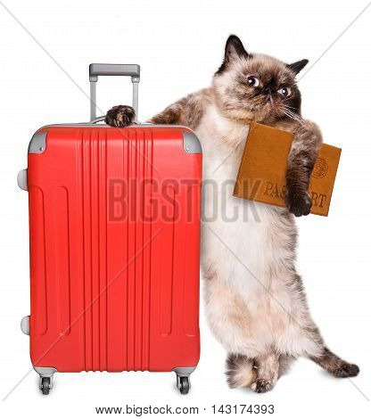 Cat with a suitcase and document. Isolated on white.