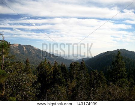 Sequoia grove at Sequoia National Park (California, USA)