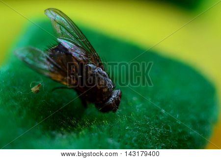 The fly in the foreground in the details