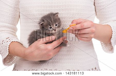 Cute little kitten on the woman hands over white background