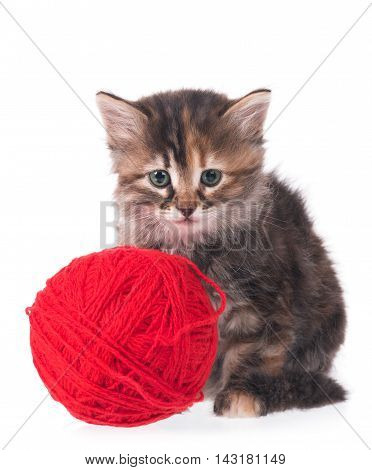 Cute siberian kitten with balls of color threads on white background cutout