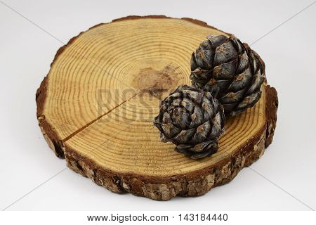 wooden circle with a split cut of the log and two pine cones white background