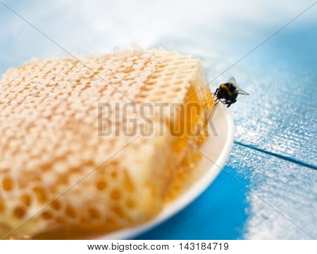 Bumblebees on honeycombs on white plate. Close up
