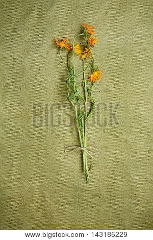 Calendula.Dried herbs for use in alternative medicine.Herbal medicine phytotherapy medicinal herbs.For preparation of infusions decoctions tinctures powders ointments tea. Background green cloth