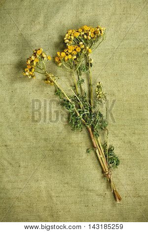 Tansy.Dried herbs for use in alternative medicine.Herbal medicine phytotherapy medicinal herbs.For preparation of infusions decoctions tinctures powders ointments tea. Background green cloth