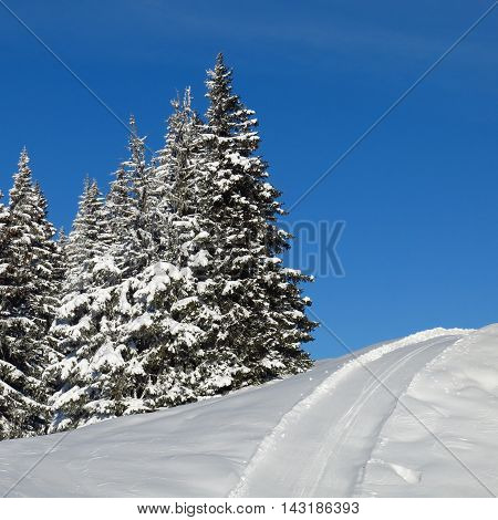 Winter scene in the swiss Alps. Snow covered firs. Ski slope.
