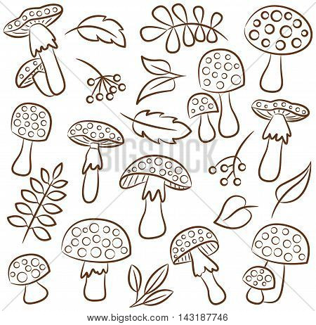 Cute amanita with leafs and berries vector contour collection. Poisonus mushrooms and plants isolated on white.