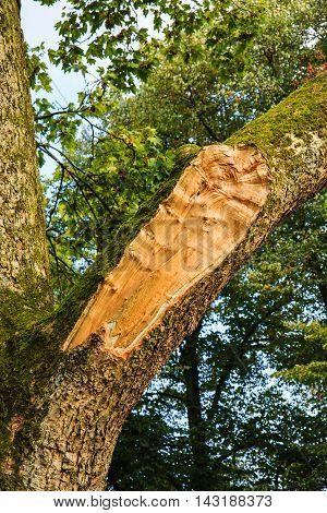Branch Tree Broken By Storm