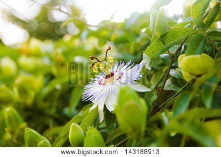 unusual flower in their natural habitat grow with green leaves