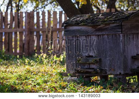 Bees fly in front of the old wooden hive in the garden on sunny day