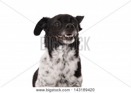 Portrait Of A Dog On White Background