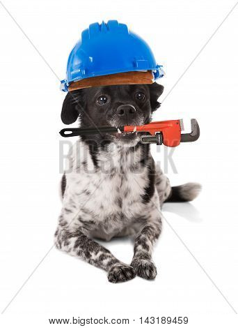 Dog Wearing Hard Hat With Wrench In Mouth