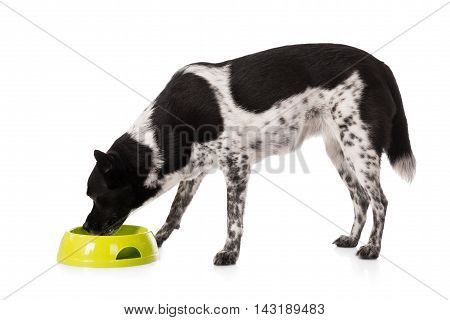 Dog Eating Food From Bowl Over White Background