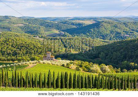 Siena province Italy - August 6 2016: Vineyards of the Castello di Albola estate in the Chianti region.