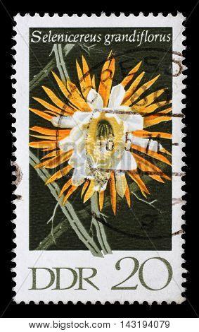 ZAGREB, CROATIA - JULY 02: a stamp printed in GDR shows Selenicereus Grandiflorus, Flowering Cactus Plants, circa 1970, on July 02, 2014, Zagreb, Croatia