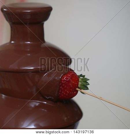Strawberry in chocolate fountain. Party and celebration calorie.