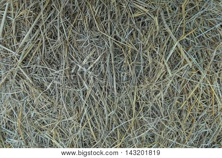 Cluster straw truss straw on nature background