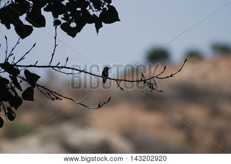 Silhouette photo of a hummingbird on a tree branch.