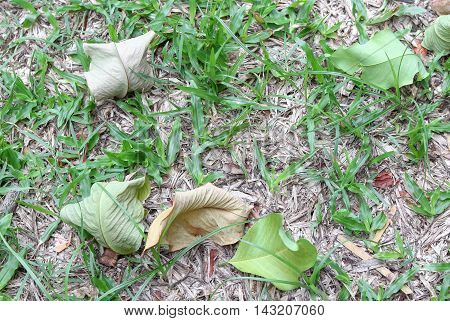 Dry leaves and leaf green drop on the grass : select focus with shallow depth of field