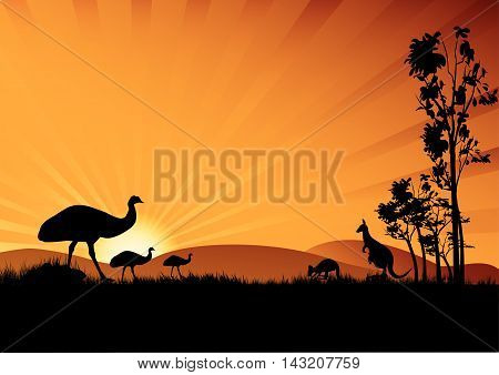 a silhouette of emus and kangaroo in the sunset Australian