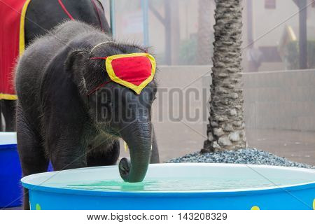 Elephant will play in the water in the basin.