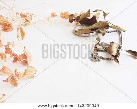 Dried flower of clover on white background