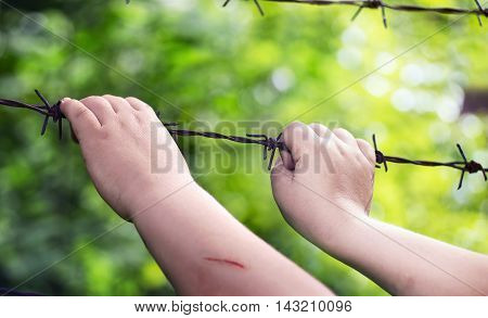 Child's hands on a rusty barbed wire in a sunny green blurry background