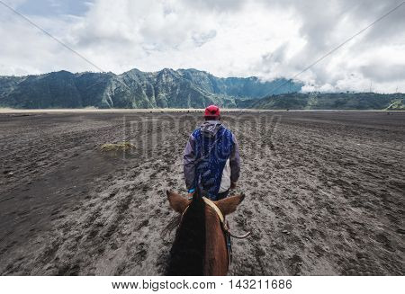 Landscape view at East java in Indonesia white riding horse with rear view of the horses
