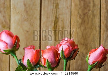 all cute pink roses on wood background
