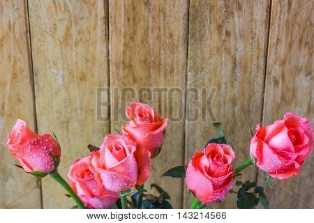 all beautiful pink roses on wood background