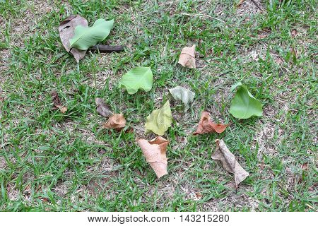 Dry leaves and leaf green drop on the grass : space for add text above and may be used as background :
