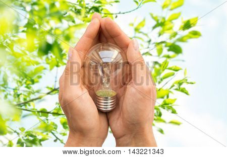 recycling, electricity, environment and ecology concept - close up of hands holding lightbulb or incandescent lamp over green natural background