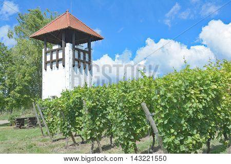 Watchtower in Vineyard of Jugenheim in Rhinehessen,Rhineland-Palatinate,Germany