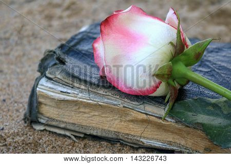 Pink rose laying on top of an old book on beach sand.