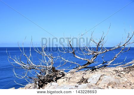 Coastline with dry bush or plant and seascape with blue sky.
