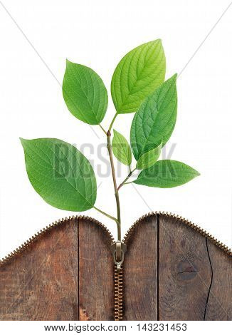 Ecology concept. Green leaves growth from old wood with open zipper